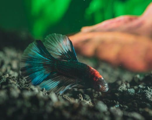 what do betta fish like in their tank