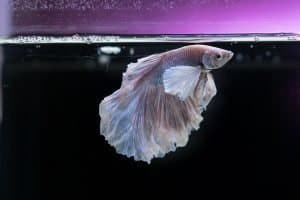 What is the Best Water Conditioner for Betta Fish