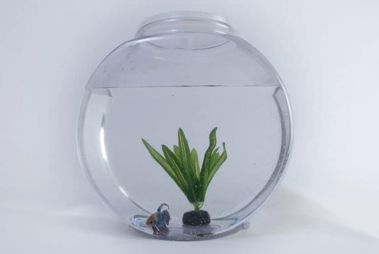 how to decorate fish tank