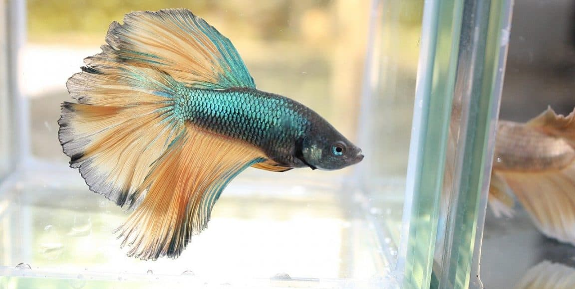 Can I add warm water to a fish tank