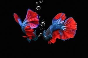 Best Food For Betta Fish