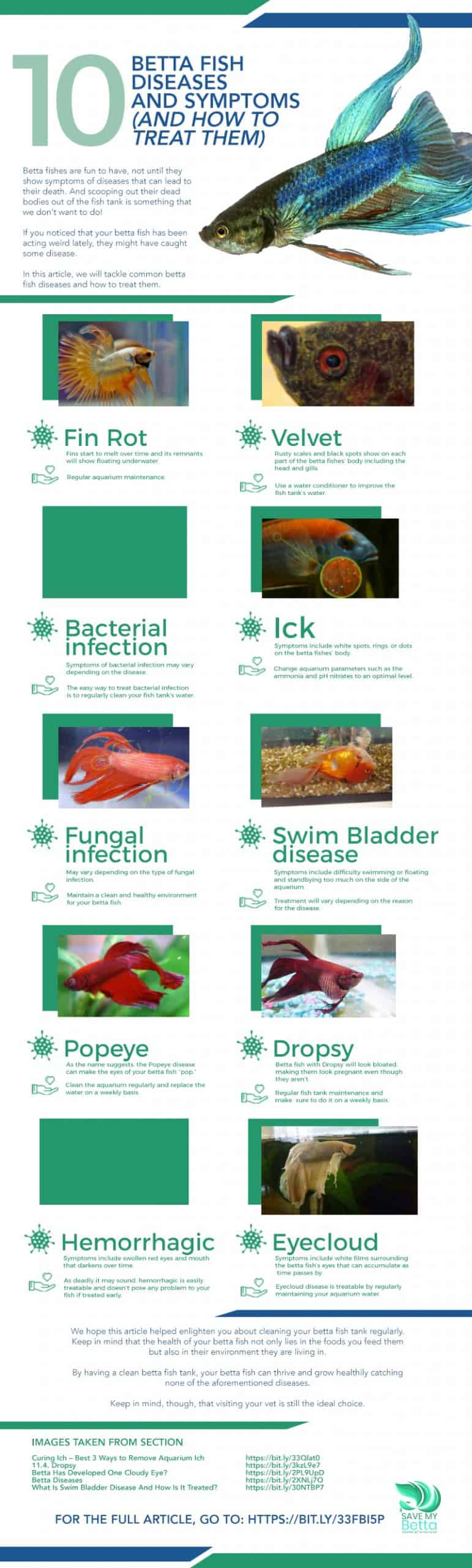 10 Betta Fish Diseases and Symptoms (and How to Treat Them)