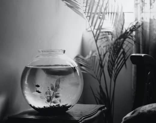 How Long Can a Betta Fish Live in a Fishbowl