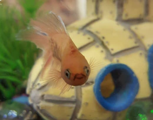How To Keep A Betta Fish Tank Clean