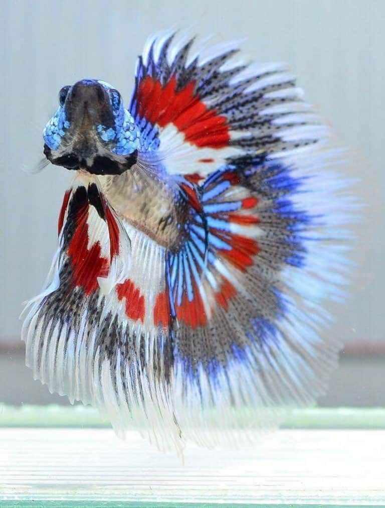 Are Betta Fishes Easy to Take Care of