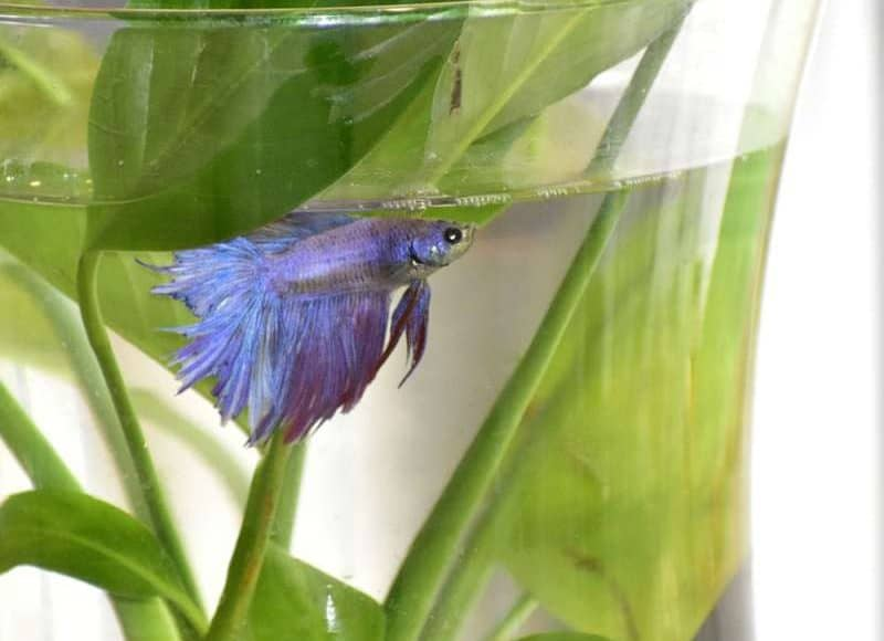 How to keep betta from jumping out of the tank